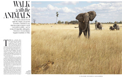 WSJ. Magazine - Walk with the Animals